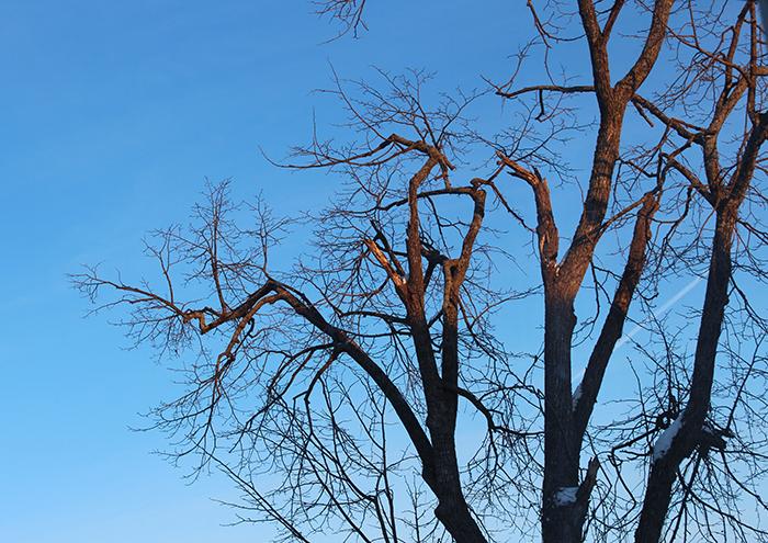 arbre-apprt2
