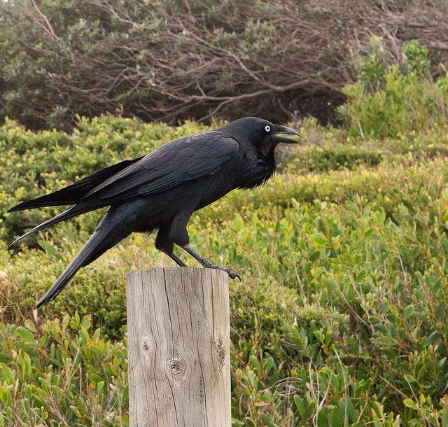 raven-doc