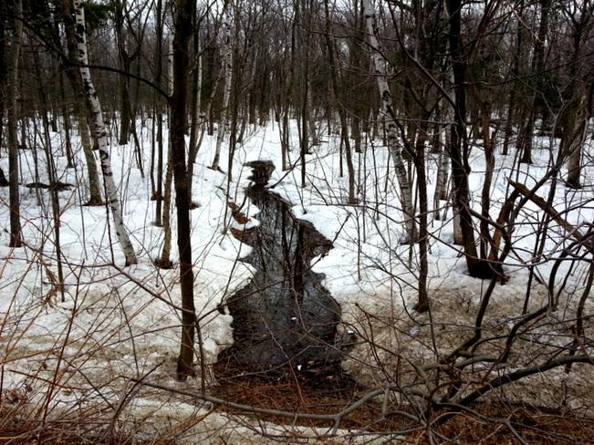 trees-snow-river